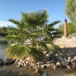 Lake Havasu City ist eine Oase in der Wüste