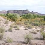 Wald mitten in der Wüste