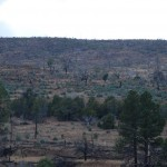 Waldbrandgebiet bei Heber-Overgaard