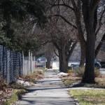 Alte Baumbestände in der Nachbarschaft
